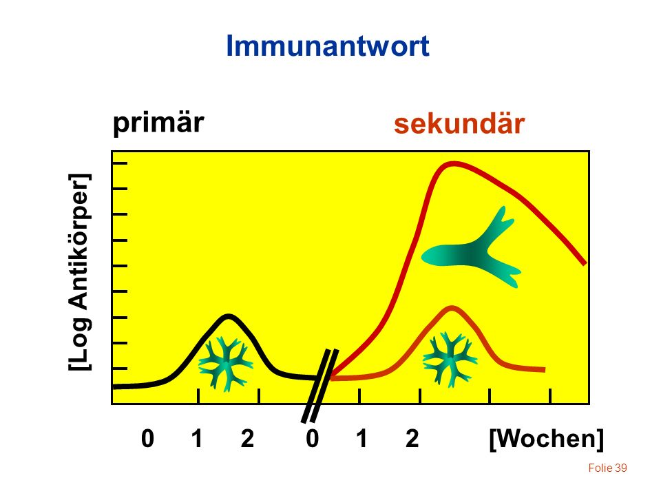 Immunantwort primär sekundär [Log Antikörper] 0 1 2 0 1 2 [Wochen]